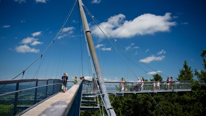 Der Baumwipfelpfad. // Foto: skywalk allgäu