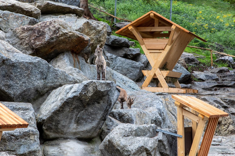 Tiroler Steinbockzentrum – Foto: Florian Lechner